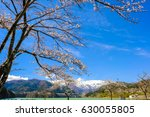 cherry blossoms  dam lakes and... | Shutterstock . vector #630055805