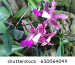 purple and white orchids close... | Shutterstock . vector #630064049