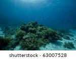coral and fish | Shutterstock . vector #63007528
