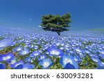 nemophila  flower field at... | Shutterstock . vector #630093281