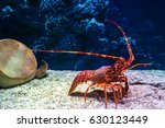 Red Lobster In An Aquarium...