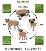 Dog Life Cycle Diagram With Al...