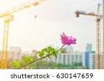 beautiful pink flower is...   Shutterstock . vector #630147659