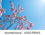 Spring Tree With Pink Flowers...