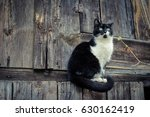 black and white cat sitting on... | Shutterstock . vector #630162419