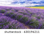 Lavender Field In Sunlight...
