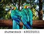 photo of a south african...   Shutterstock . vector #630231011