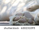 Close Up Of Paw Of Sleeping Lion