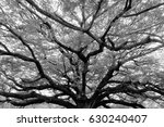 Black And White  Photography...