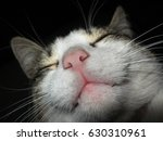 Stock photo tired cat on a black background 630310961