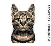 cat spotted striped head... | Shutterstock .eps vector #630329291