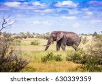 Small photo of African Savannah Elephant at the Kruger National Park, South Africa