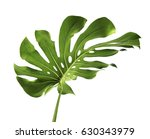 monstera large green jungle... | Shutterstock . vector #630343979