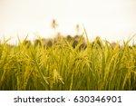 rice field   Shutterstock . vector #630346901