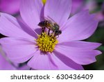 close up of  a bee working hard ... | Shutterstock . vector #630436409