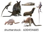 collection of different wild... | Shutterstock . vector #630454685