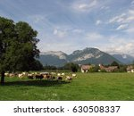 cows next to country houses and ... | Shutterstock . vector #630508337