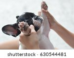 french bulldog puppy dog playing with a girl
