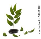 tranquil scene. green leaf and... | Shutterstock . vector #63062185
