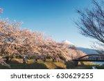 mt. fuji and cherry blossom... | Shutterstock . vector #630629255