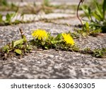 photo shows some weeds growing... | Shutterstock . vector #630630305