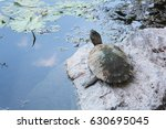 The Big Turtle With Carapace...
