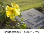 Yellow Cemetery Flowers In...