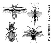 big set of insects  bugs ... | Shutterstock .eps vector #630775211