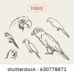 collection of realistic parrots ... | Shutterstock .eps vector #630778871