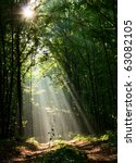 Stock photo sun beams pour through trees in foggy forest 63082105