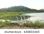 white goose | Shutterstock . vector #630831065