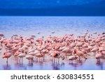 Pink Flamingo. Lake Nakuru....