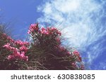 Pink Tropical Flowers Of...