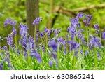 bluebells | Shutterstock . vector #630865241
