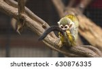Common Squirrel Monkeys At Zoo