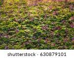 Purple Wild Flowers Carpet...