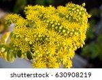 Beautiful Yellow Flowering...