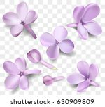 soft pastel color floral... | Shutterstock .eps vector #630909809