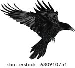 Raven   Vector Illustration