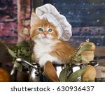 Stock photo kitten in a cook s cap cat cook 630936437
