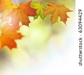 autumn leaves on a tree... | Shutterstock . vector #63094429