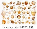 Pattern Of Exotic Sea Shells...