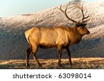 Bull Elk In The Tundra - stock photo