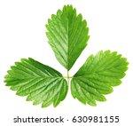 Fresh Green Strawberry Leaf...