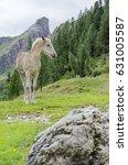 An Ochre Young Horse Standing...