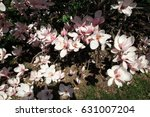 pink flowers of blooming... | Shutterstock . vector #631007204