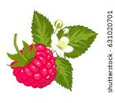 ripe juicy raspberry with... | Shutterstock .eps vector #631020701