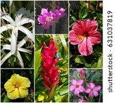 hawaii flower collection | Shutterstock . vector #631037819