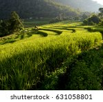 Small photo of Rice fields in Chiang Mai., Barn Paa Pong Piang, Morning light flows over the rice fields.