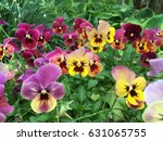 Pansy Flowers Vivid Yellow...
